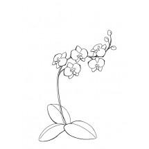 Coloriage Orchidées