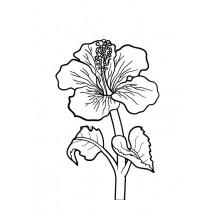 Coloriage Hibiscus