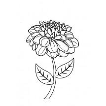 Coloriage Dahlia