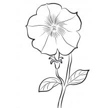 Coloriage Petunia