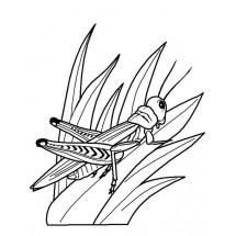 Coloriage Sauterelle