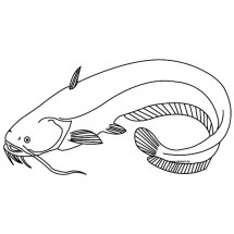 Coloriage Poisson chat