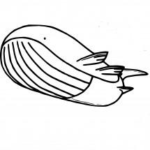 Coloriage Pokémon Wailord